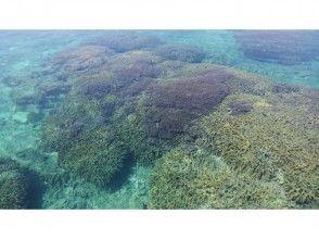 [鹿兒島縣與論]赤珊瑚森林浮潛之旅