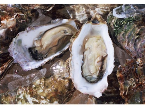 【Winter only! 】 Excellent access! All you can eat oyster oyster from Ise · Futamiura barbecue center!の紹介画像