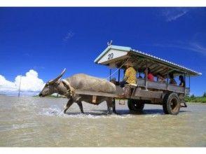 【沖縄・西表島】 1日マングローブSUP&水牛車でわたる由布島さんぽ