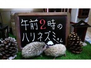 【東京・池袋】ハリネズミふれあい☆チクチクモフモフ体験!貸切り60分★~12名様までご対応。