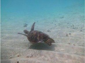 【鹿児島・与論島】ウミガメと泳ぐ ♪ シュノーケリングツアーの画像