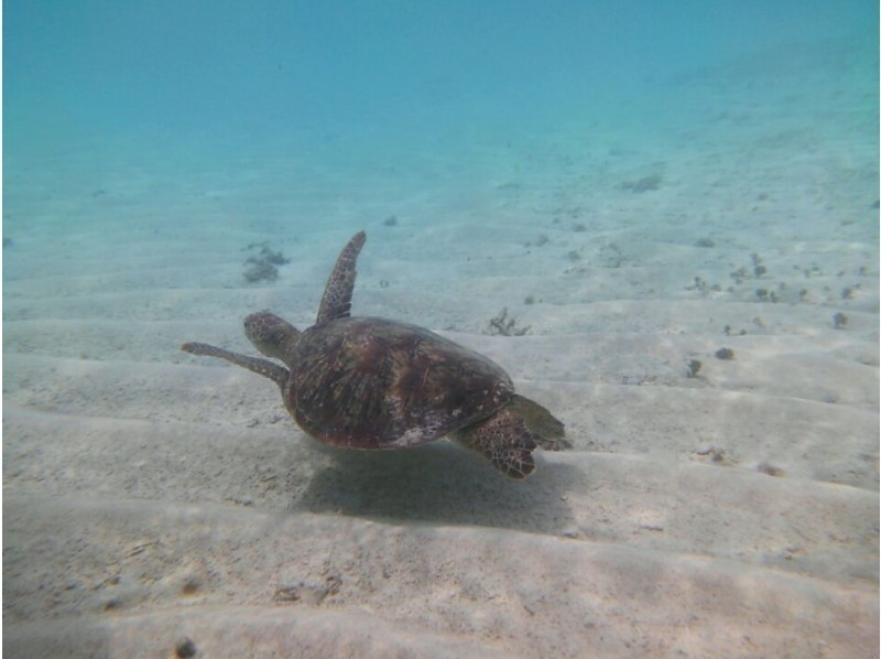 【Kagoshima · Yoron Island】 Swimming with Sea Turtle ♪ Snorkeling Tourの紹介画像