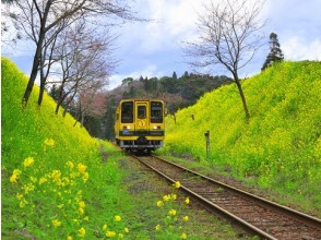 Go rape field! Travel on Isuimi Railway and Herb Picking & Herbal Tea Blend Experience Bus Tour 【11497】