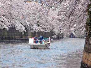 【Hamamatsucho collection】 Meguro River Cherry Blossom Cruise Cruise & Takanawa Cherry Blossom Festival (Prince Hotel Lunch Buffet) 【11696】