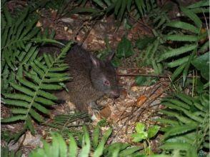 【鹿児島・奄美大島】奄美の生物&満天の星空を堪能!原生林ナイトツアー