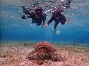 电晕措施是完美的!从12年前开始营业!海龟繁荣的点火器!与原始海龟Snorkel摄影之旅2岁的游泳率达到100%〜OK!