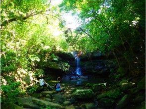 【沖縄・西表島】クーラの滝ツアー