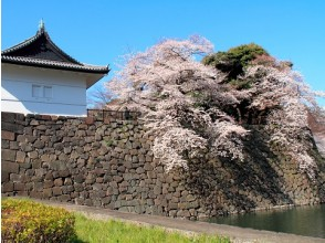 Cherry blossom viewing of the Imperial Palace East Gardens and masterpiece Tokyo Disappearing Cherry Blossoms Touring 3 Tours Bus tour Tour of Meiji Memorial Hall with Japanese cuisine [11732]