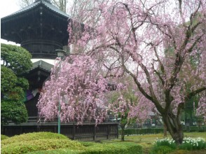鑁 寺 · Ashikaga School 2 Large Shizuka cherry blossoms & guide guide · Japan's oldest school tour bus tour [11761]