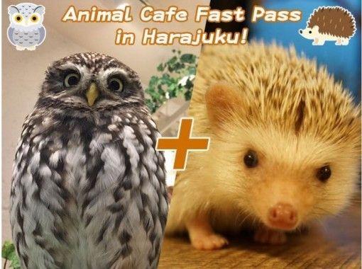 【東京・原宿】ファストパスで原宿の動物カフェへ行こう!大人気のふくろうカフェ&ハリネズミカフェ!