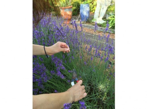 ~ Herb garden by the sea ~ Herb garden · Pocket