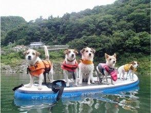 静水SUPクルージング体験 2時間コース(愛犬と参加OK!)