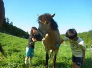 【北海道・富良野】曳き馬:親子乗りコースの画像