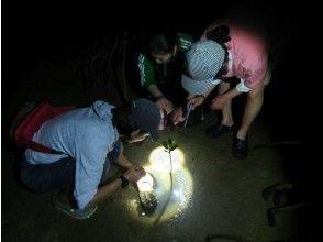 """[冲绳护]八ga岛""""夜红树林步道"""",推荐给生物和探险爱好者!"""