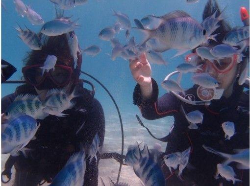 【沖縄・石垣島】2,5h ショート体験ダイビング