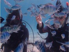 【沖縄・石垣島】4,5h AM体験ダイビング