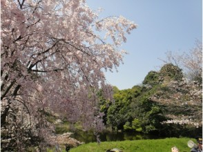 "The Imperial Palace ""Dori Avenue"" Spring Open to the public & relaxing cherry blossom garden tour Nature tour - Lunch of Shogendo Gozen ~ 【11993】"