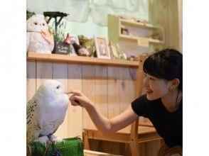 【和歌山・岩出市】ふくろうカフェでふれあい体験!ワンドリンクセットプラン(1時間)