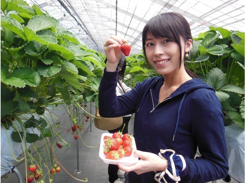 Attractive Strawberry picking experience