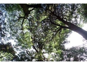 【世界遺産・屋久島】朝食を森で