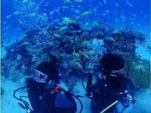 【沖縄県・本部町】初めての方も安心!伊江島で体験ダイビング!