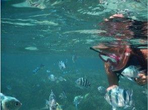 【沖繩縣·總店城】第一次和孩子們可靠!在主島北部的港島浮潛!