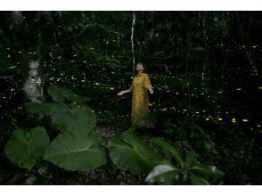 [石垣岛/日落] ⑤自然灯饰!限时八重山姬萤火虫观赏之旅[仅限3-5月]