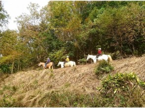 【兵庫・篠山】初夏 初心者森林浴外乗+山を登り高さを感じる散歩90分