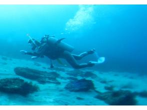 【静岡・伊豆】ファンダイビング【1ビーチ1ボート】の画像