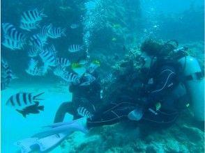 【沖縄・那覇発】チービシ諸島で開催。体験ダイビング&パラセーリング(ウミガメコース)