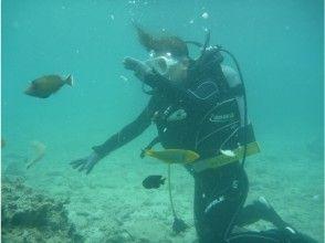 【沖縄・北部】美ら海水族館近くで、パラセーリング&体験ダイビング(ジンベイコース)の画像