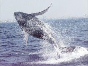 [沖繩]觀鯨的(北部出發)圖像之旅