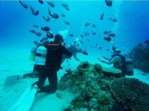 【沖縄本島、名護、ライセンス講習】沖縄の綺麗な海でダイバーになろう!ダイビングライセンス取得コース