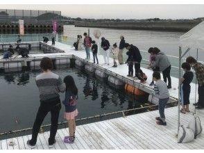 [Kumamoto ・ Amakusa]Dolphin watching&Marine fishing pond ・ Unlimited fishing (60 minutes + 60 minutes)