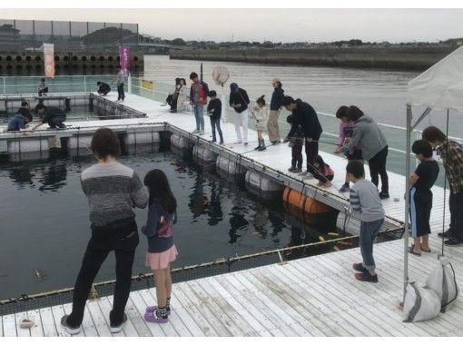 【熊本・天草】イルカウォッチング&海上釣り堀・釣り放題(60分+60分)