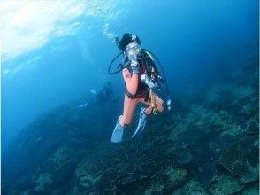 【和歌山・田辺】体験ダイビング~水中世界へようこそ~