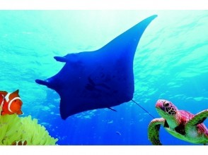 [Okinawa / Ishigaki island] Impressive 120%! !! Manta ray and sea turtle experience Diving ★ OK from 10 years old (2 dives, 3 hours)