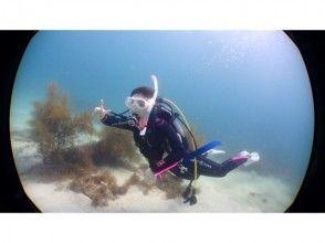 【伊豆・下田】下田ブルーの海で体験ダイビング