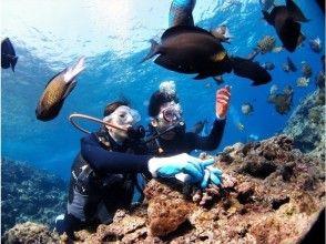 【沖縄・恩納村】★8歳・9歳からOK★ ちびっこお魚体験ダイビング!子供と家族でダイビングに挑戦!