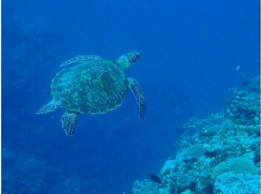 3月〜10月の限定プラン!米原ビーチで海カメやニモに会えるシュノーケリングツアー!!大人気!野生のウミガメ遭遇率90%!