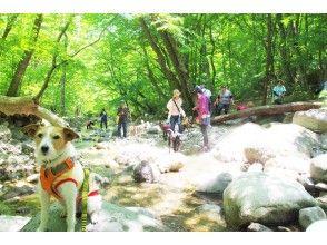 【栃木・那須板室】ガイドとゆっくり森のお散歩!板室温泉ネイチャーツアー