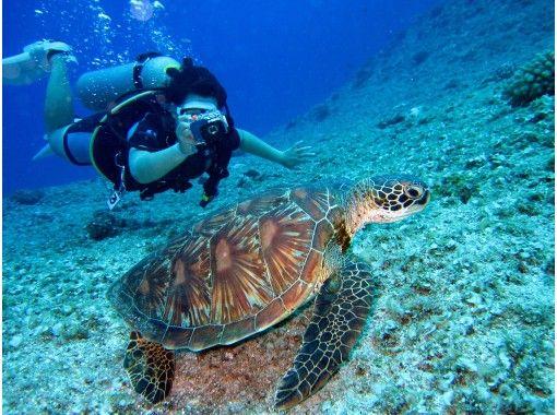 【ボートで行く 沖縄青の洞窟・貸切体験ダイビング】満足度97.2%!写真・動画・餌付体験も無料!