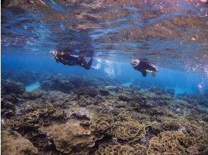 【沖縄・宮古島】1組貸切制★たくさんの珊瑚とお魚のいる伊良部島の海でシュノーケリング!3歳からOK!