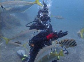 【静岡・沼津】大瀬崎でしずおかな海で 体験ダイビング☆お客様のペースに合わせてご案内☆