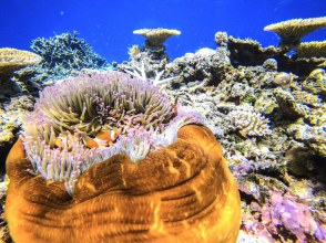 [Okinawa / Iriomote Island] ⑯ Regional common coupon OK! [half-day] Sea turtles and snorkel! Barasu Island Snorkeling [free photo data]