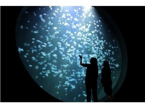 【山形・鶴岡ハイヤープラン】鶴岡市日本遺産めぐりと加茂水族館