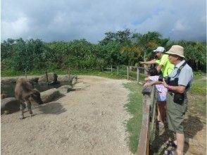 【沖縄・西表島】世界自然遺産登録地!8.カヌー体験クーラの滝つぼ&水牛車観光1日、写真データ、昼食付き