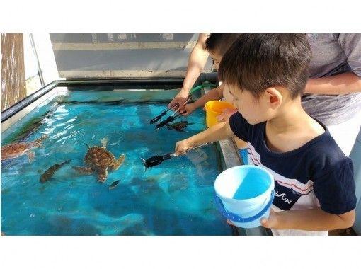 ウミガメ飼育員さんのおしごと体験!ウミガメと一緒に学んで楽しもう!専門スタッフがレクチャーします!
