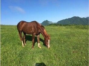 【北海道・日高】体験乗馬・お一人様プラン(60分)チョット乗ってみたい方・初心者の方