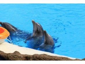 [Tokyo, Higashi Izu, Ito] Day Dolphin swim& experience Diving